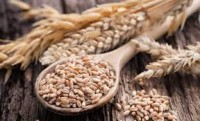 The Ministry of Agriculture proposes to introduce new restrictions on grain exports - experts comment