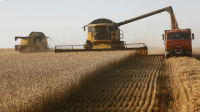 • Grain harvest in Russia in 2019 amounted to 120.6 million tons